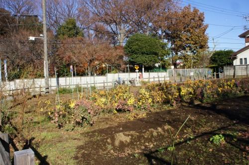 畑では、さまざまな野菜や花が育てられている