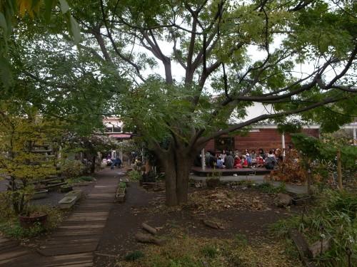 園に入ってすぐに目に留まる、センダンの樹
